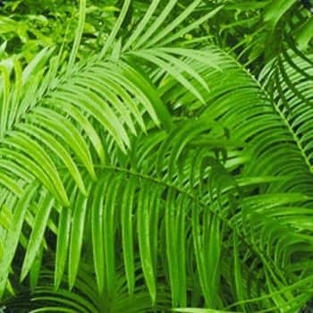 BuzziSkin Printed Jungle