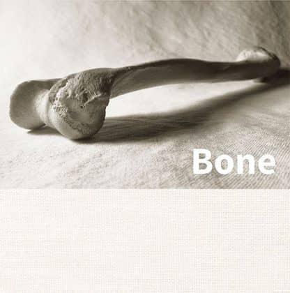 Squid Bone color